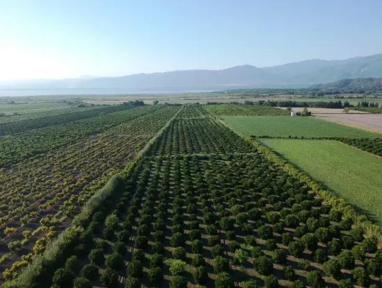 Oriya Tepearasi For Sale In Citrus Garden