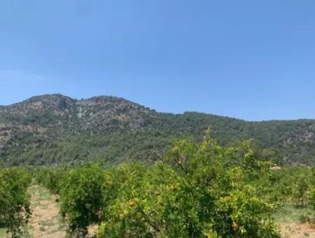 Muğla Ortaca Mergenlide 8312 M2 250 M2 İnşaat İzinli Arsa Satılık