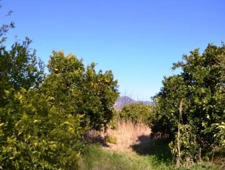 Beyobasında Satılık Köy Evi Ve Portakal Bahçesi